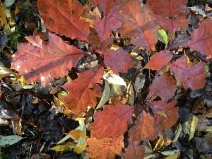 herfstbladeren-1